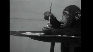 Quadros de chimpanzé à venda em Londres... e não são baratos