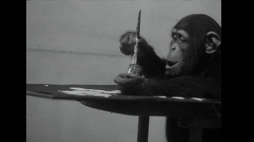 Конго, шимпанзе и художник