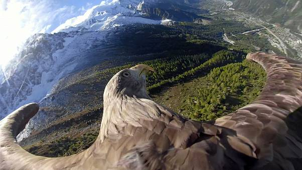 Chamonix: Victor the eagle, witness of climate change