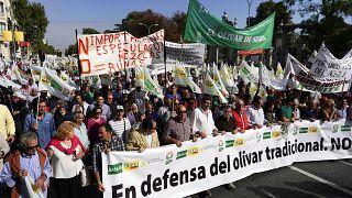 Ισπανία: Διαδηλώσεις για το ελαιόλαδο