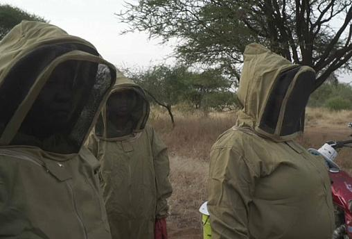 Watch: Bee-keeping scheme transforms landscapes and women's lives