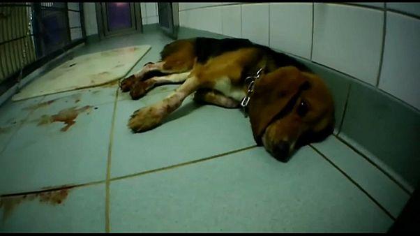 """Video mostra """"laboratório dos horrores"""" para experiências em animais"""