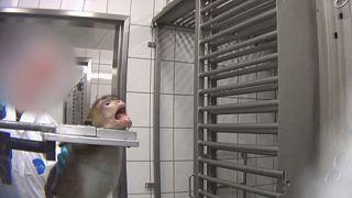 Borzalmasan kegyetlen állatkísérletekre derített fényt egy német csoport - CSAK ERŐS IDEGZETŰEKNEK!