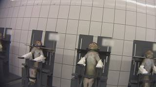 Distressing footage: Animal cruelty activist films undercover at German testing laboratory