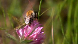 Desaparición masiva de insectos en el oeste de Alemania