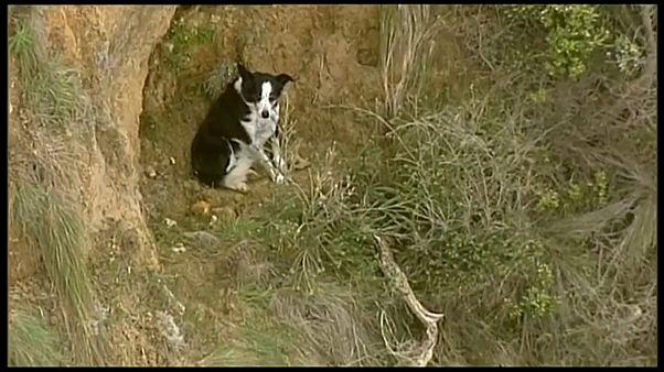 شاهد: عملية إنقاذ كلب علق على حافة منحدر في أستراليا