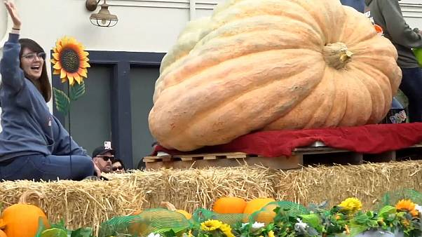 Half Moon Bay Pumpkin Festival draws thousands to coastal town in US