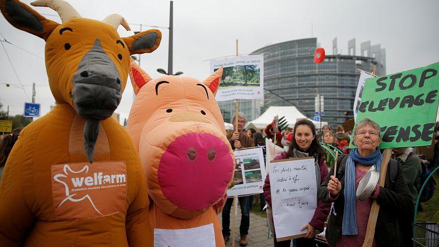 تجمع اعتراضی کشاورزان مقابل پارلمان اروپا در استراسبورگ
