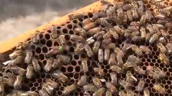 EU-Parlament will besseren Schutz von Bienen