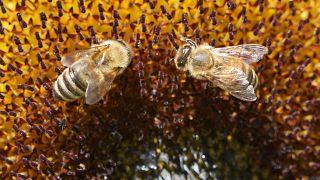 Fokozott védelmet követel a méheknek az Európai Parlament