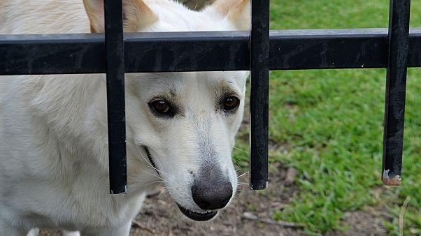 ABD'de hayvanlara eziyet ağır suçlar kapsamına alındı, 7 yıla kadar hapis cezası gündemde