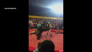 شاهد: لحظة هجوم دب على مدربه خلال عرض في سيرك روسي
