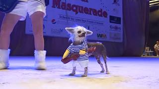Watch: Pets in Florida get dressed up for masquerade ball