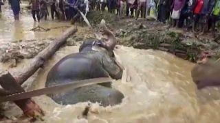 Из болота тащить слона
