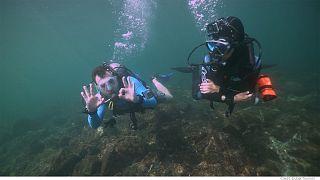 Plongée au coeur de la biodiversité marine de Dubaï