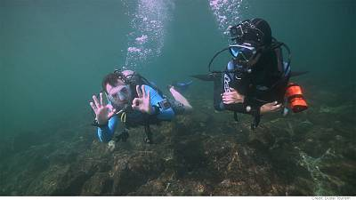 Adventures – Explore, dive and discover the sealife in Dubai's waters