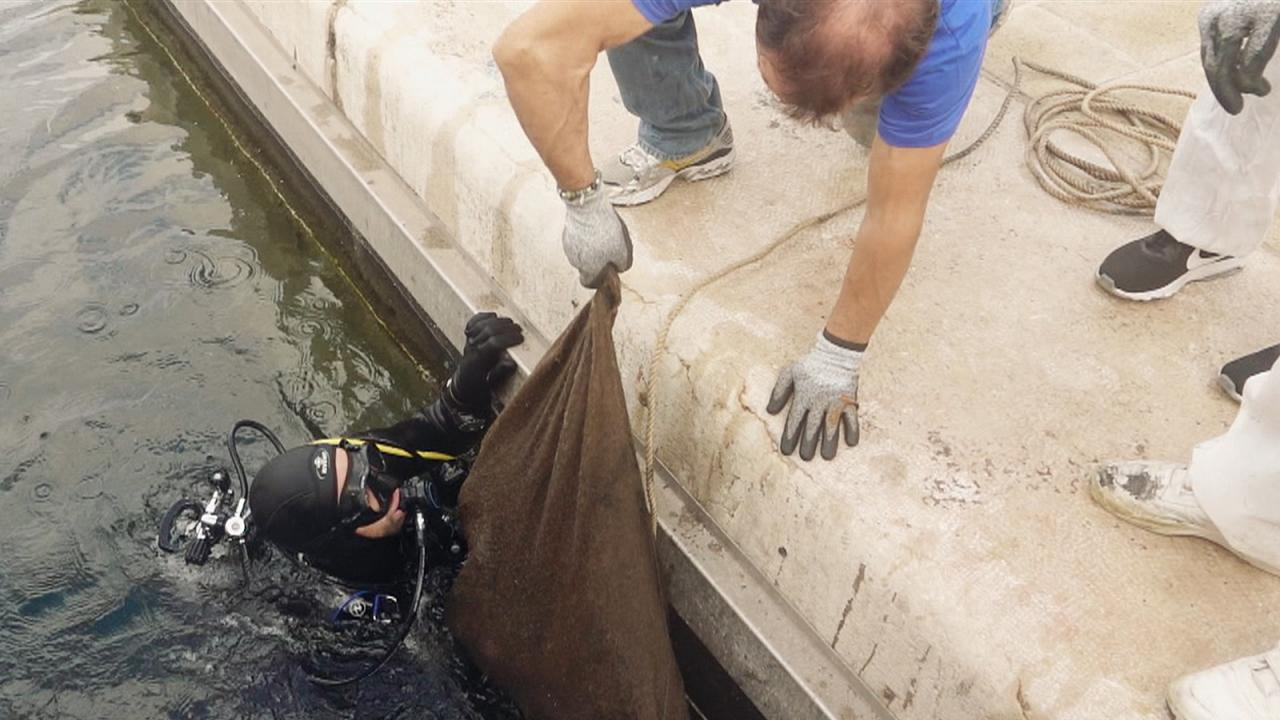 Önkéntes búvárok takarítják a marseille-i kikötő szemetét