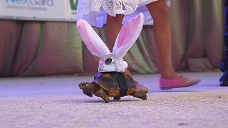 Hasenschildkröte und Hundetutu: Menschen verkleiden Haustiere (Video)