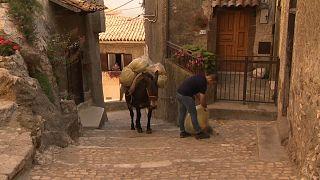Watch: Mules replace bin lorries in hilltop Italian town