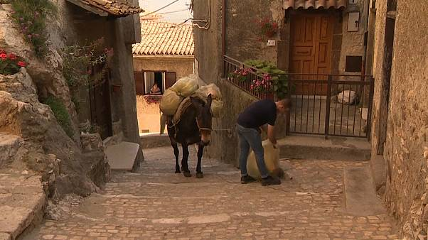 Watch: Mules replace bin lorries in hilltop Italian town