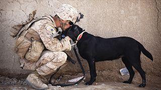 """ترامب ينشر صورة الكلب """"بطل"""" العملية الأمريكية لقتل البغدادي"""