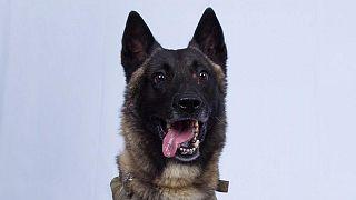 ترامپ تصویر سگی را که در عملیات کشتن بغدادی شرکت داشت، منتشر کرد