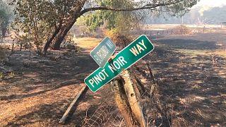 ویرانی تاکستانها در آتشسوزی مهیب شمال کالیفرنیا