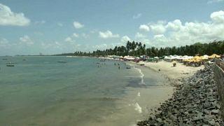 Brésil : les conséquences de la marée noire sur la biodiversité