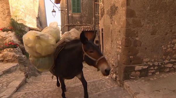 جمعآوری زباله با قاطرها در آرتنای ایتالیا