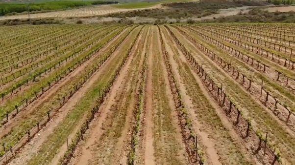 Los vinos españoles buscan nuevos mercados