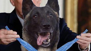 Trump Bağdadi'yi tünelde kovalayan köpeğe madalya takarken gösteren sahte fotoğrafı paylaştı