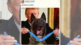 واکنشها به عکس فتوشاپی «سگ قهرمان» در حال دریافت مدال از ترامپ