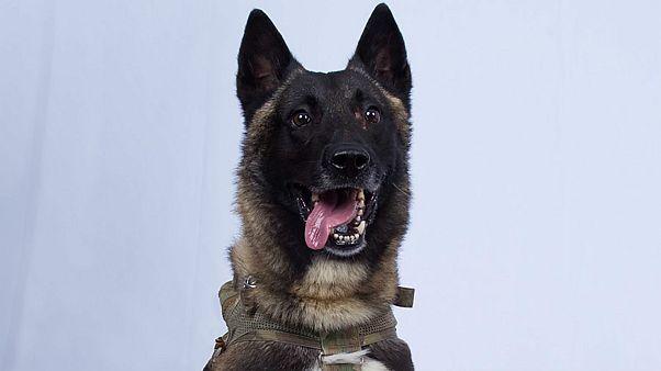 دعوة كلب شارك في عملية تصفية البغدادي إلى البيت الأبيض