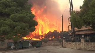 EU Commision: Forest fires struck in more European countries than ever before last year