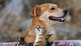 Αδέσποτη γάτα παίζει με  σκύλο στο Ναύπλιο