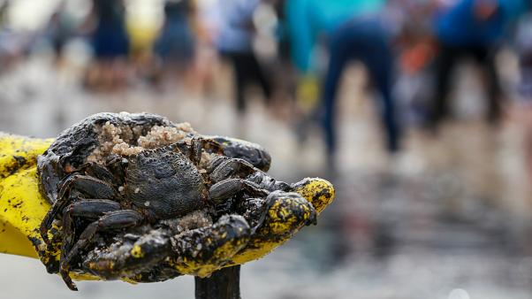 Öldesaster in Brasilien: Die Suche nach den Schuldigen
