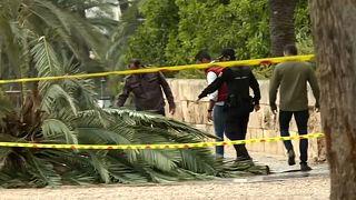 Mallorca: 37-Jährige von Palme erschlagen