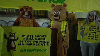 Stündlich verschwinden 3 Hektar Wald: Demo gegen illegale Abholzung
