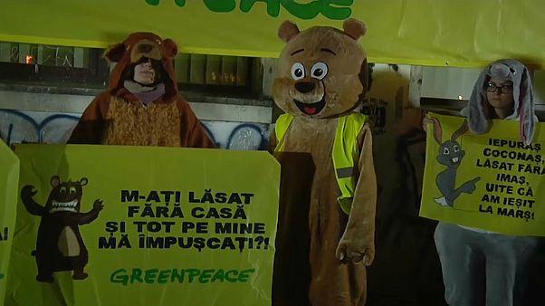 Románia: Tüntettek az erdőirtások ellen