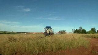 Brasile: in aumento il numero di tumori legato all'esposizione ai pesticidi