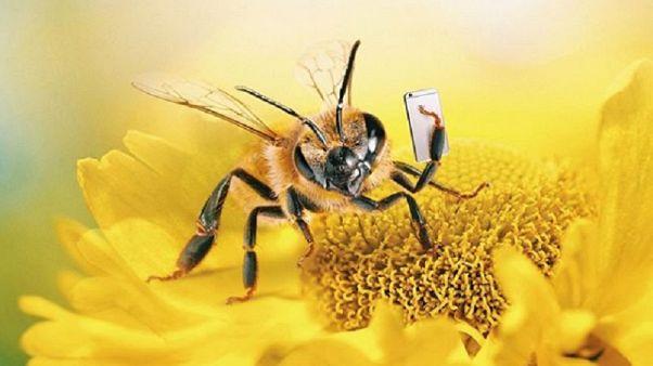 «Β»: Η πρώτη μέλισσα influencer!