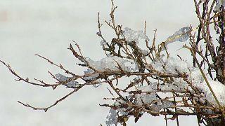 Schneeflocken in Davos und St. Moritz