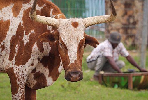 كوانزا سول مخزن تموين غذائي لأنغولا بفضل مزارعها الكبيرة ومزارعيها الصغار
