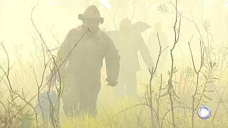 Pantanal arde mais do que a Amazónia