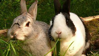 10 тысяч кроликов сгорели на ферме в Саратовской области