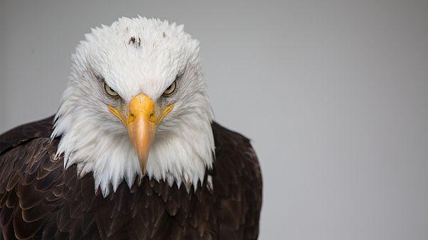 ایرانسل هزینه رومینگ عقابهای روس را رایگان کرد