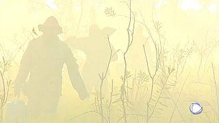 Brésil : le Pantanal en proie aux flammes