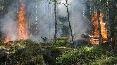 Forest fires have been raging in Indonesia