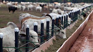 Endüstriyel hayvancılık ve tarım