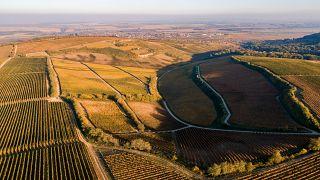 Where's the money? Farming subsidy exposure creates stir in EU Parliament